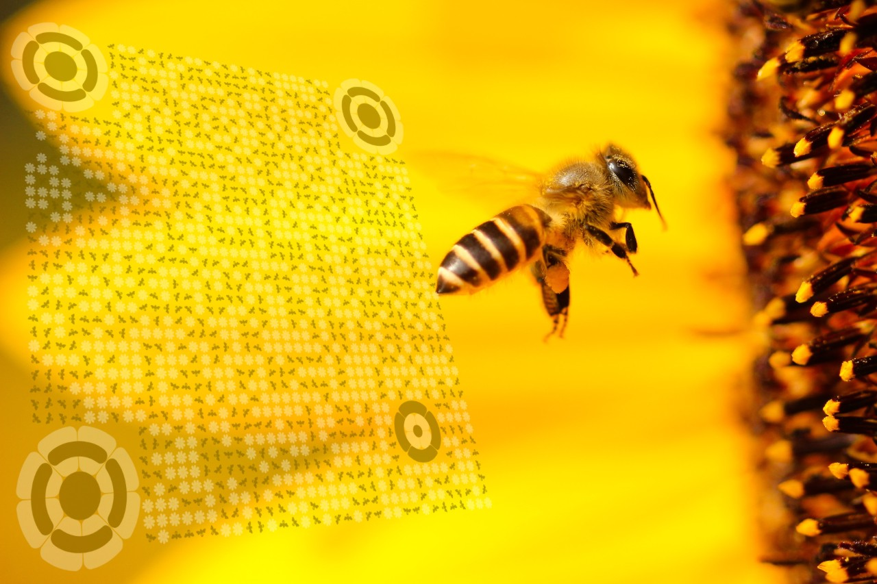 QrcodeLab online qr code generator - qr code image editor - bee theme qr code with bee close-up on sunflower